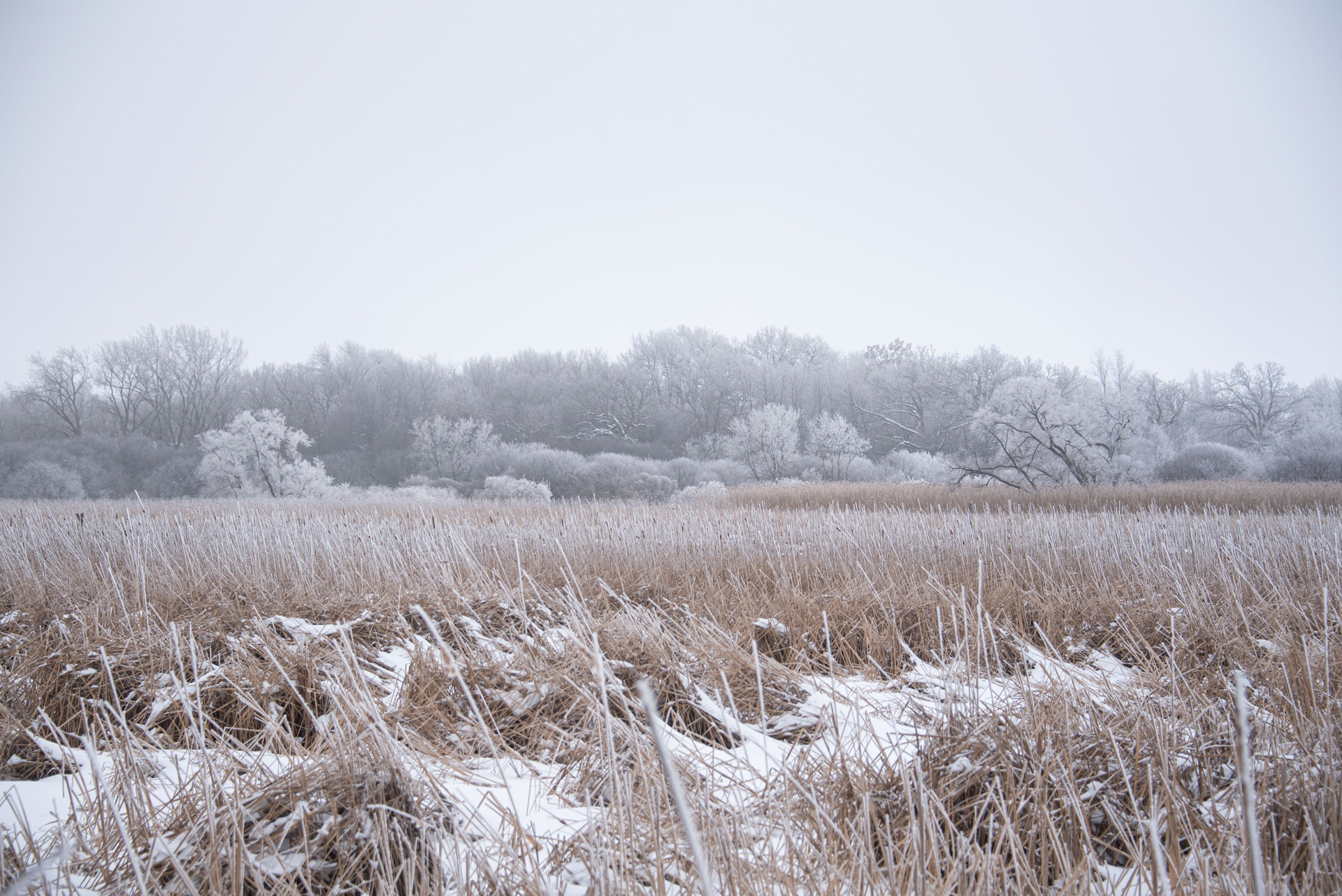 Wisconsin countryside covered in hoarfrost